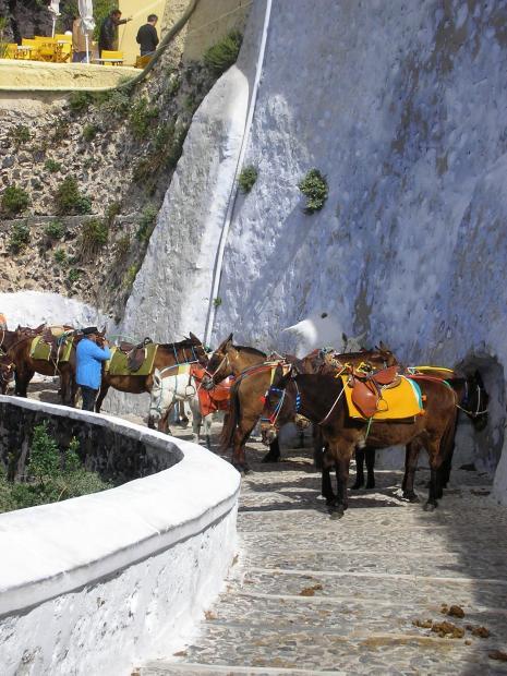 Ezels om af te dalen naar haven in Fira