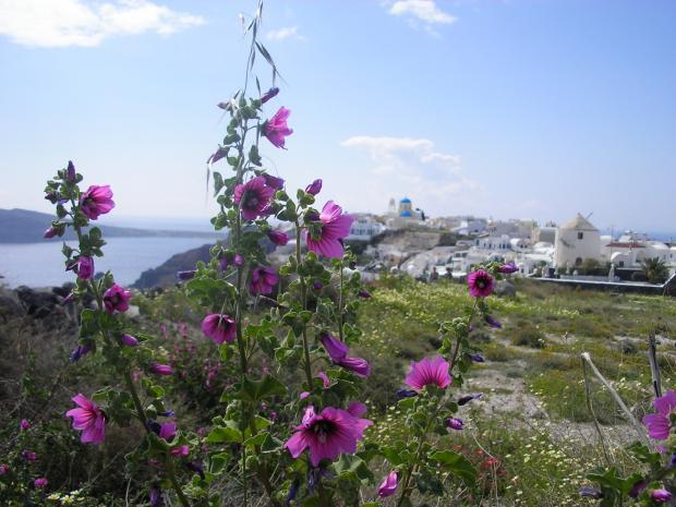 Bloemen Santorini
